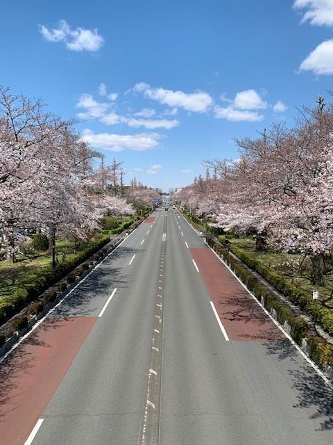 daigakudori.jpg